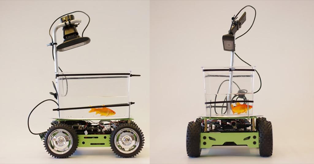 伊藤潤二「魚」現實版?讓於可以自由在陸地上行走的荷蘭魚缸車