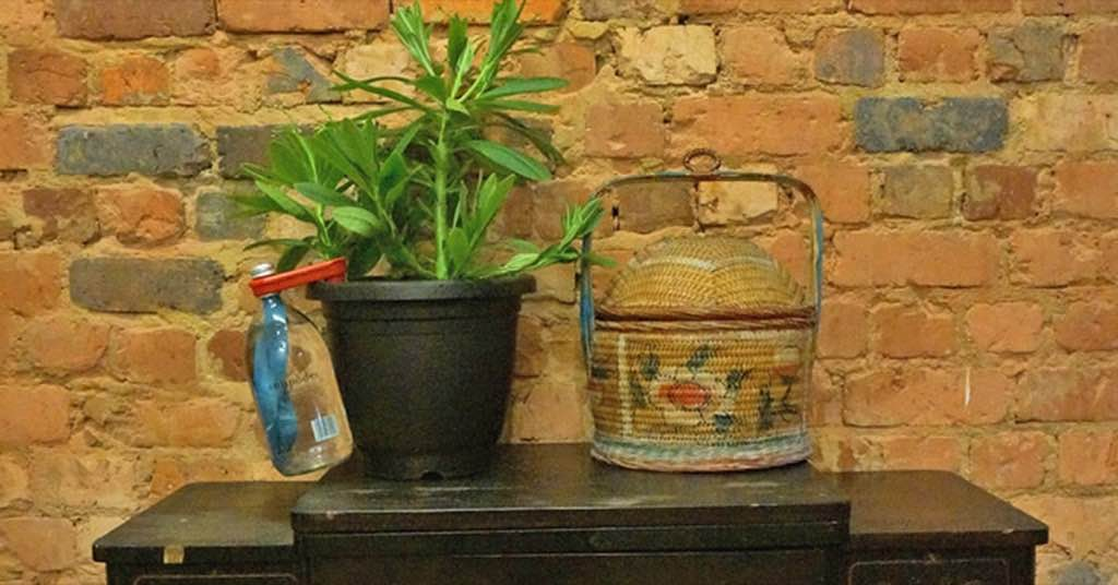 設計居家:再也不怕你的植物渴死!GIY stick 讓你的植物自己喝水~