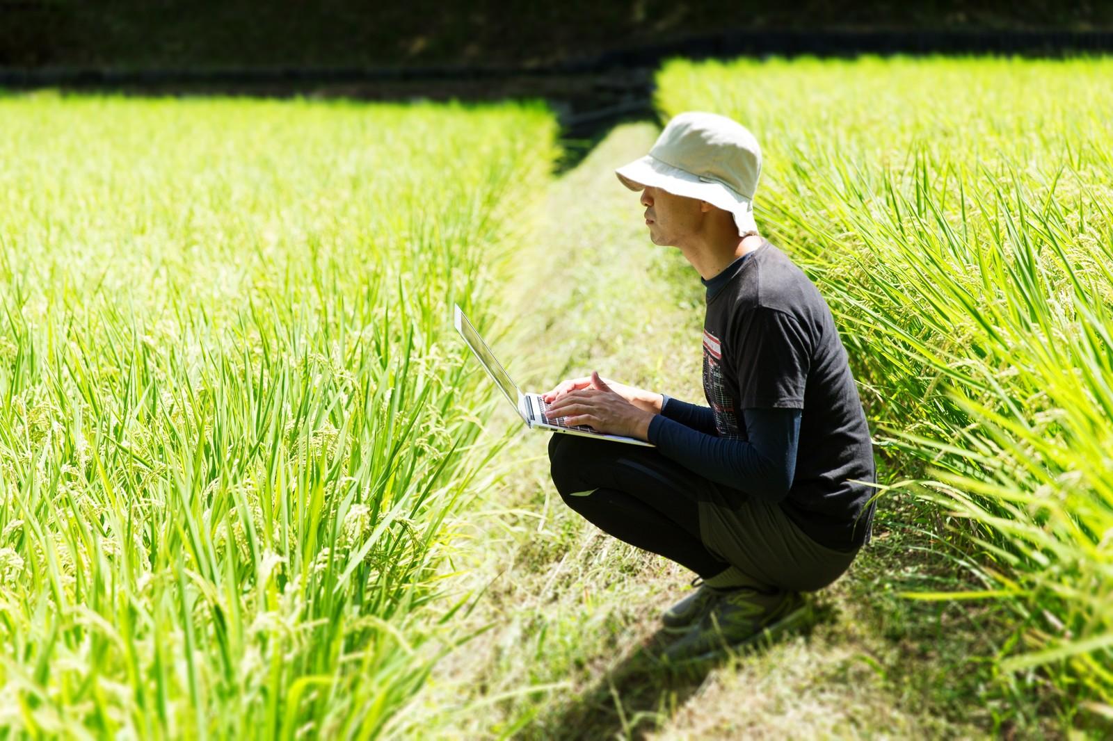 別以為好飯必是越光米!日本五大名地、七大名米(上)